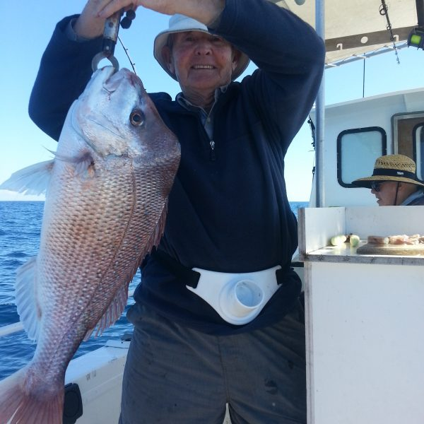 Snapper caught off Mooloolaba on the Sunshine Coast on a reef fishing charter