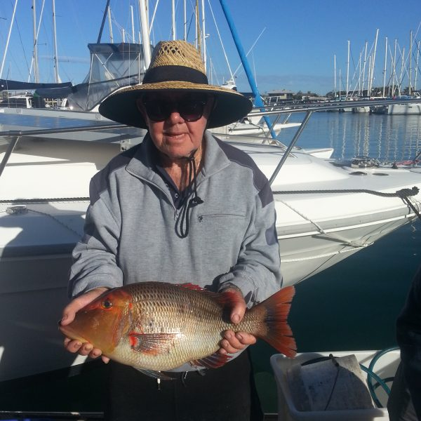 Mooloolaba fish species found on the Sunshine Coast while reef fishing.