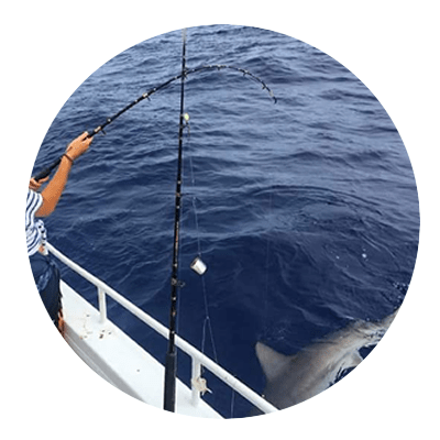 Gummy Shark found off Mooloolaba on the Sunshine Coast
