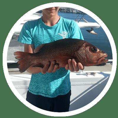 Sunshine Coast Mangrove Jack fishing
