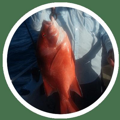 Red Emperor Sunshine Coast