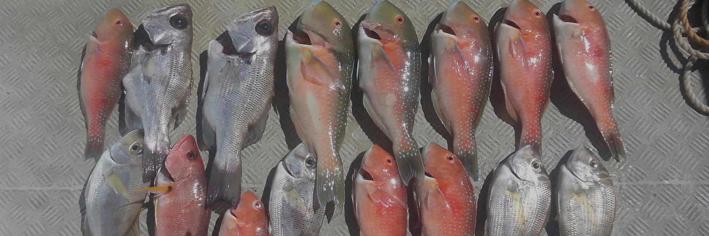 Mooloolaba Fishing Charters